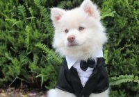 cute wedding guest with a difference